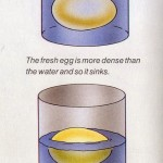 Egg test – Simple egg freshness test